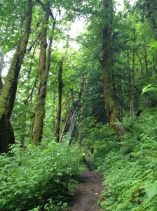 Lewis River Trail Washington