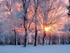 The Light of Winter